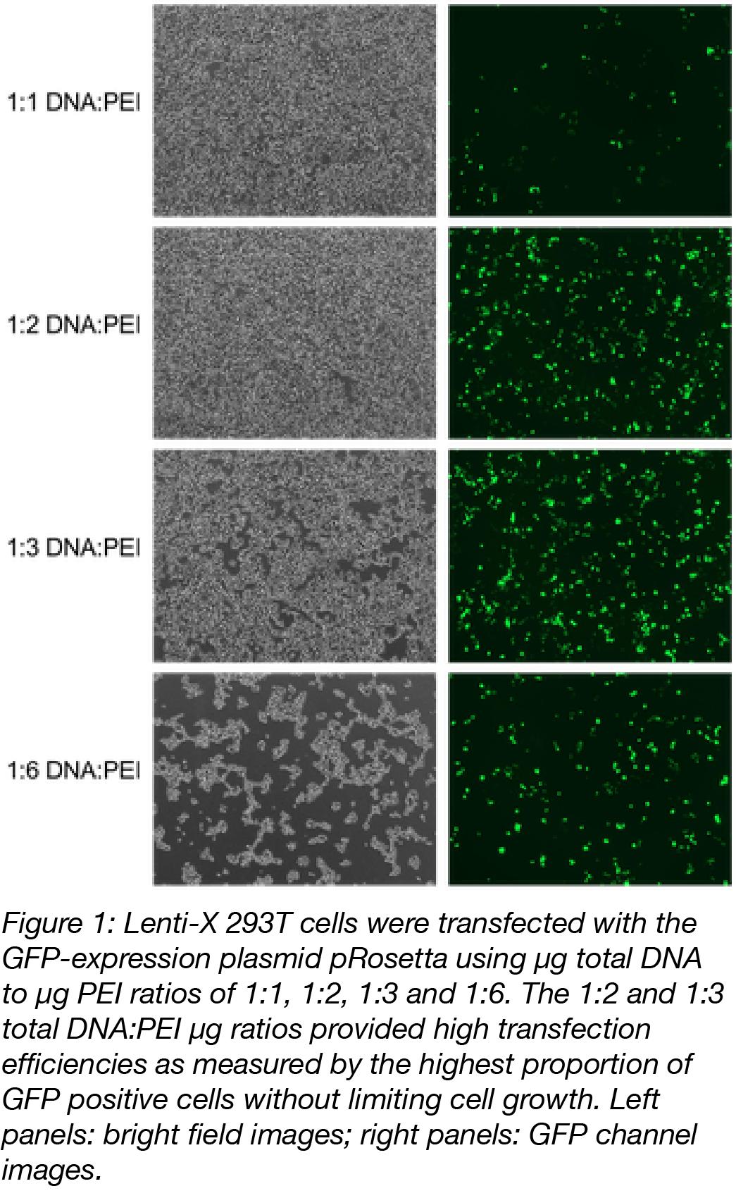 PEI Transfection Ratio effect on efficiency-01
