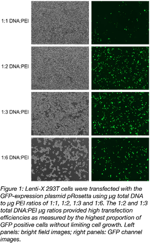 PEI Transfection Ratio effect on efficiency-01