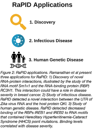 Applications of RaPID Discovery and Disease