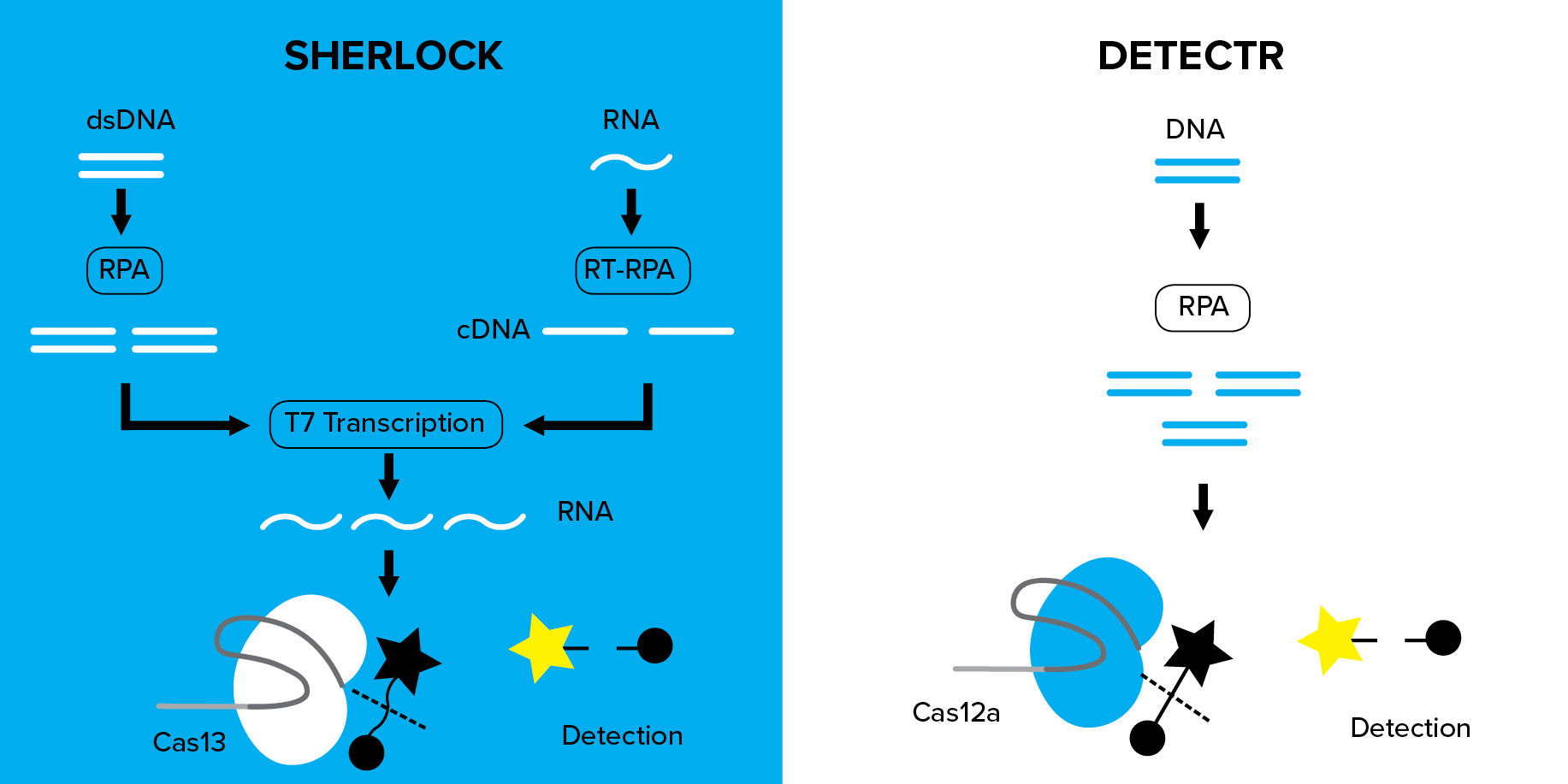 comparison between SHERLOCK and DETECTR nucleic acid detection methods