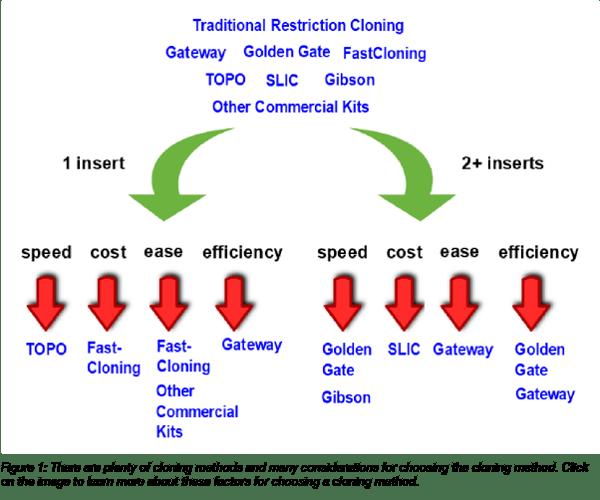 Flowchart for choosing a cloning method