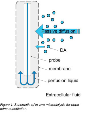 in vivo microdialysis for dopamine quantitation