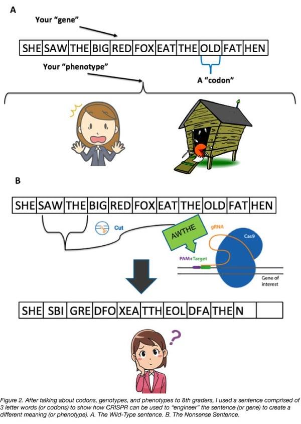 CRISPR genome edit example