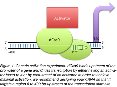 Cas9 Activator