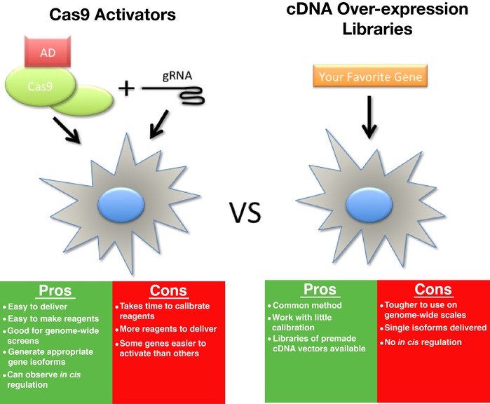 Pros and Cons of Cas9 activators and cDNA over-expression libraries