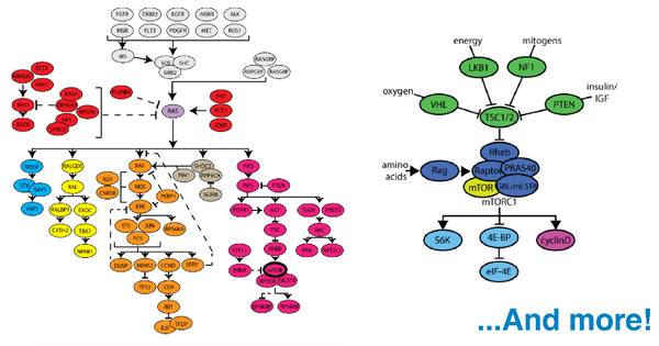 Samples of cancer signaling pathways