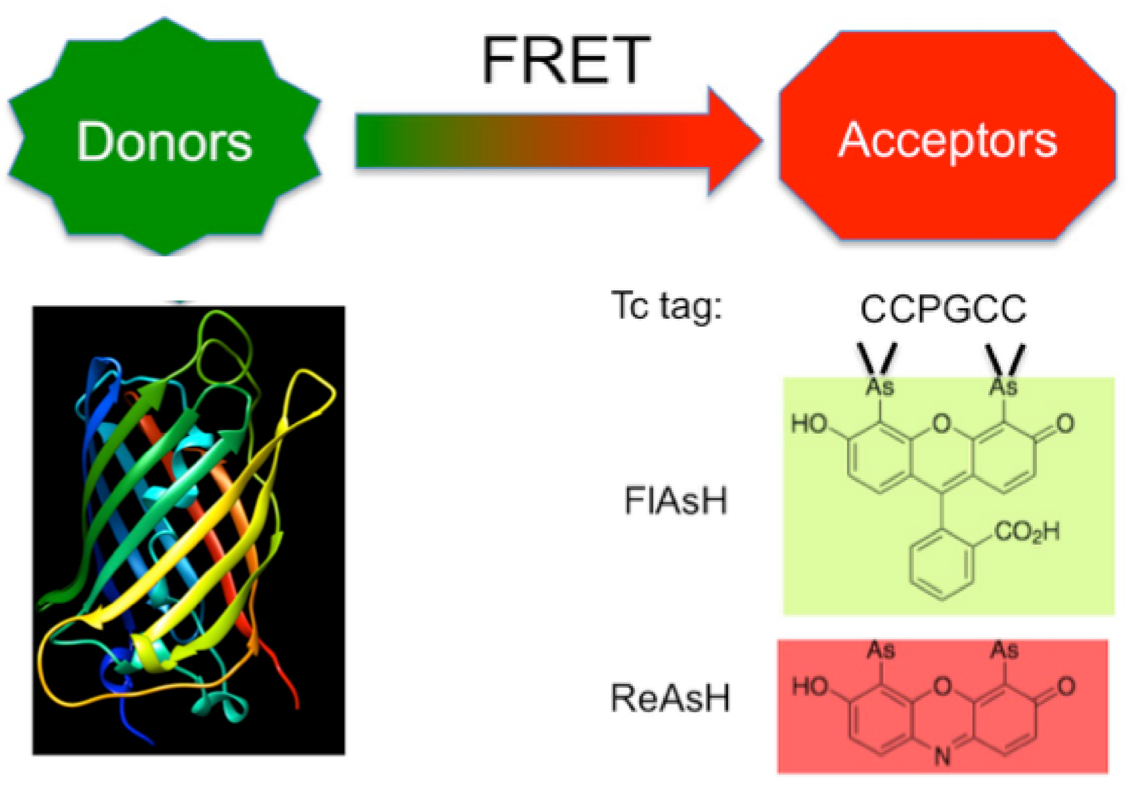 Examples of FRET Donors and Acceptors