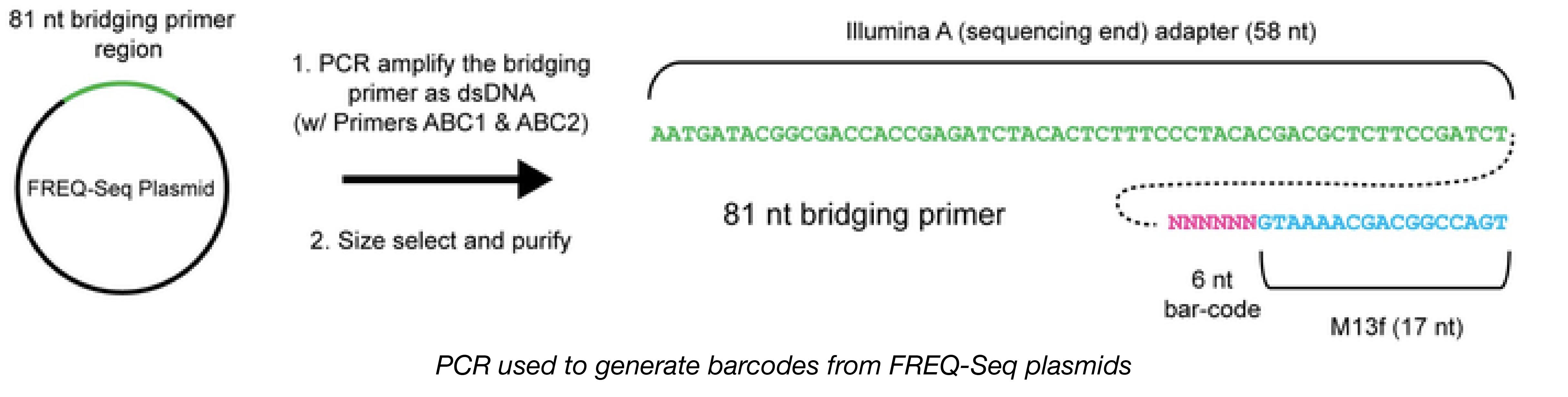 FREQ-seq Barcode PCR