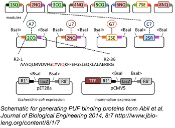 PUF Protein Assembly Schematic