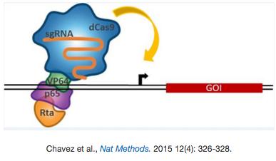 dCas9-VPR activator