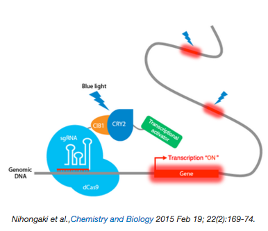 CRISPR-Cas9_Optogenetic_TOol.png