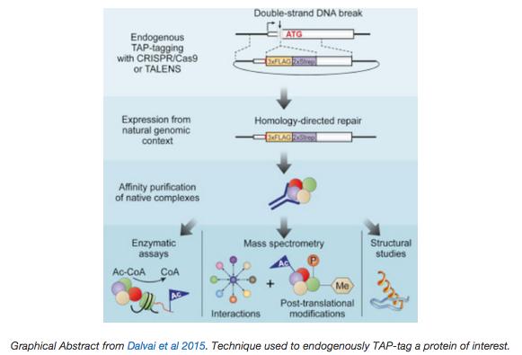CRISPR tagging