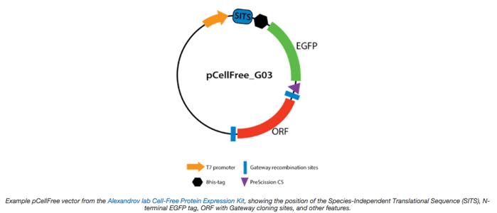 pCellFree plasmid