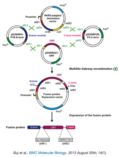 Toolkit_for_Constructing_Fusion_Proteins.png