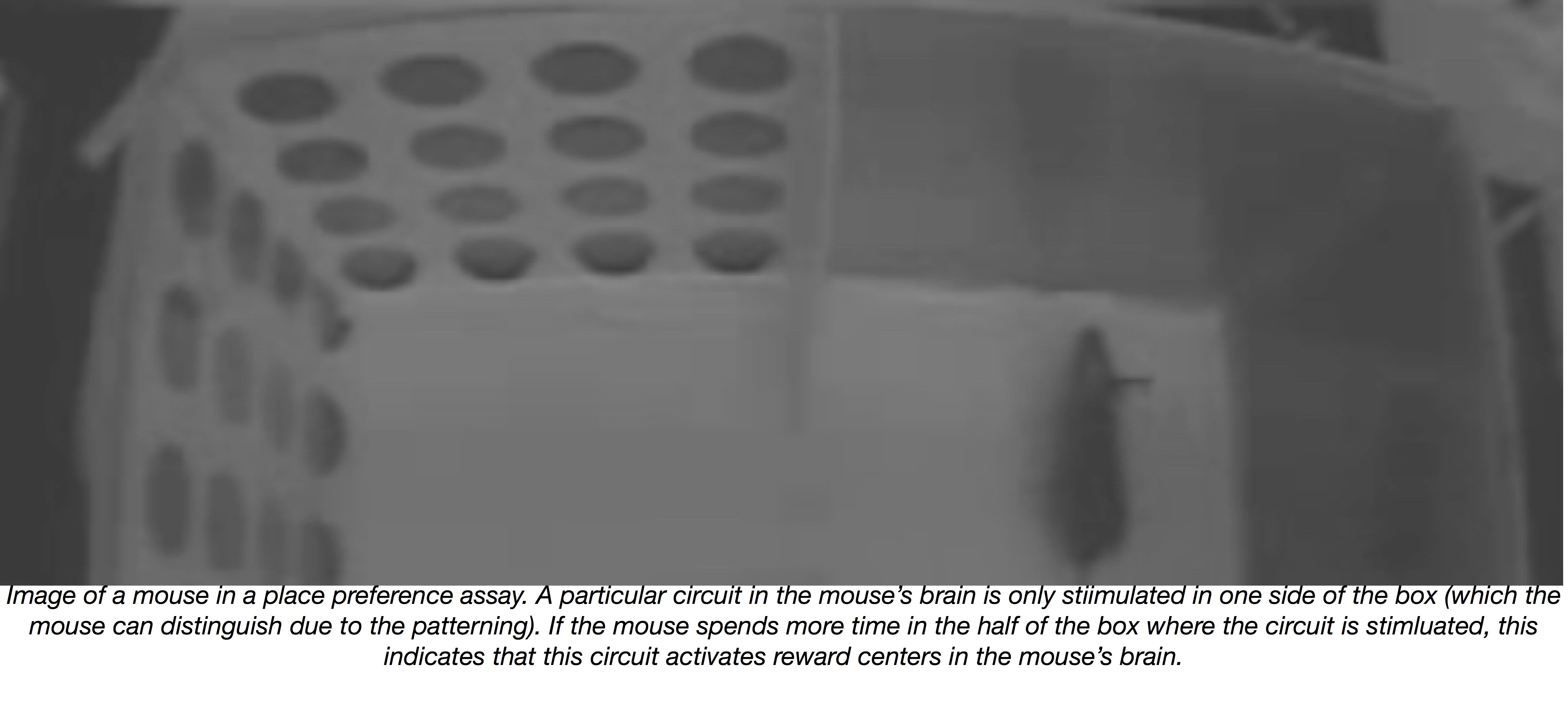 Mouse in place preference behavioral experiment