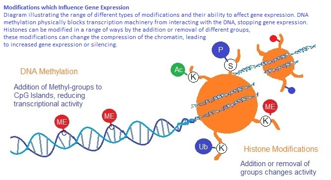 Epigenetic histone modifications that alter chromatic compaction and gene expression