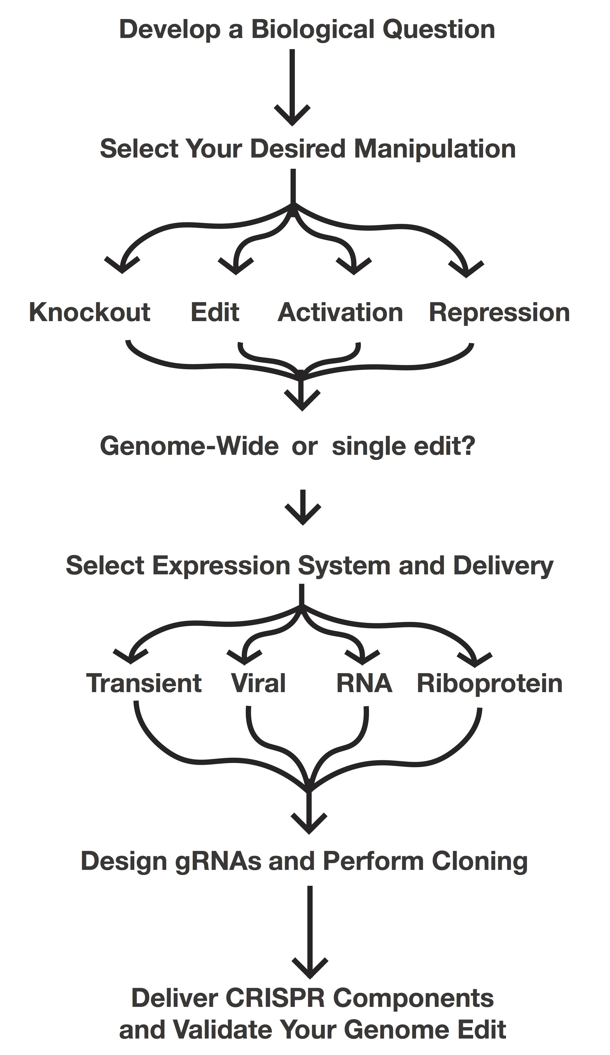 Plan your CRISPR experiment flow chart