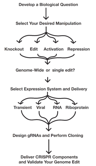 Plan your CRISPR experiment flow chart
