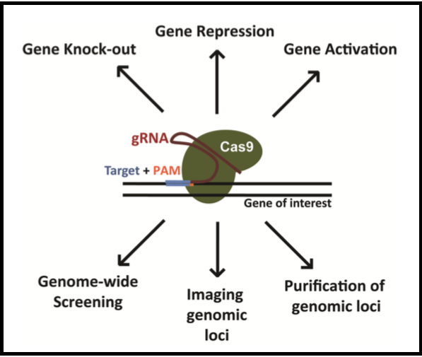 Experimental Possibilities for CRISPR