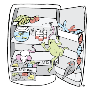 A comic of an open lab refrigerator with model organisms, DNA, and a drawer that says CRISPR:Cas with Cas proteins inside.