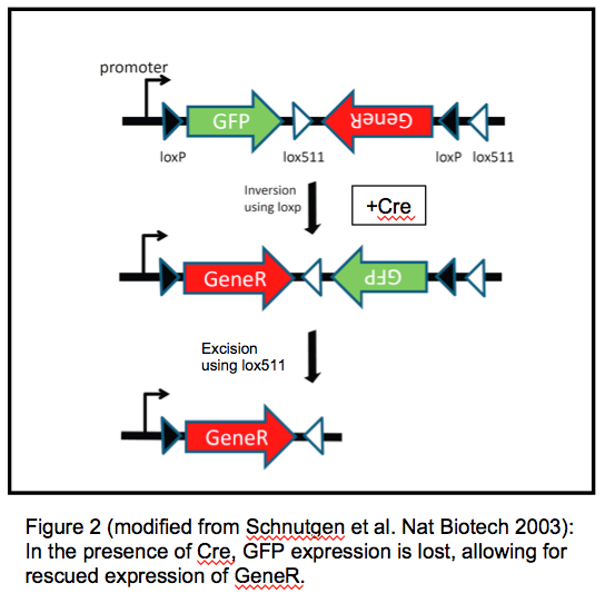 FLEx switch using Cre to activate gene expression