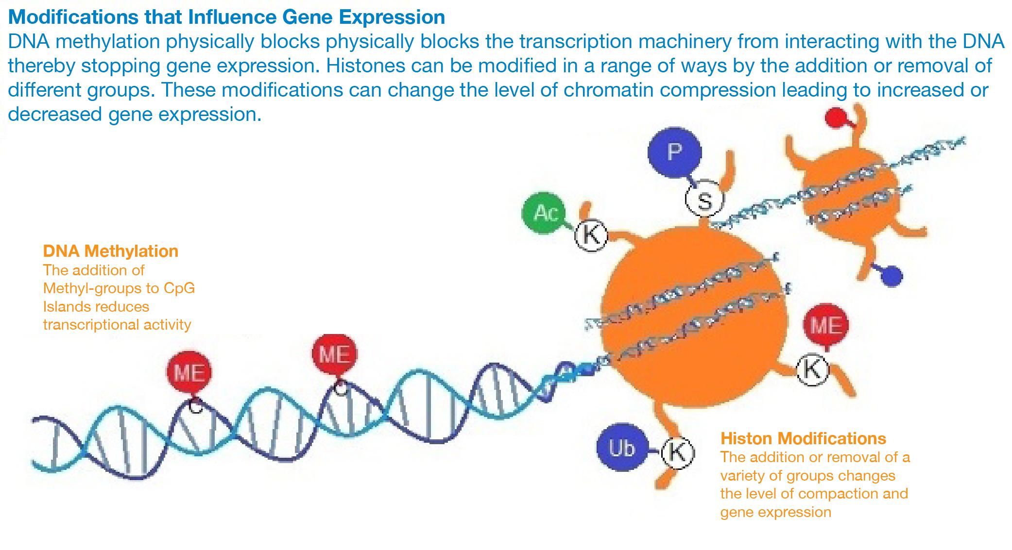 FRET Based Biosensor Figure 2-01.png