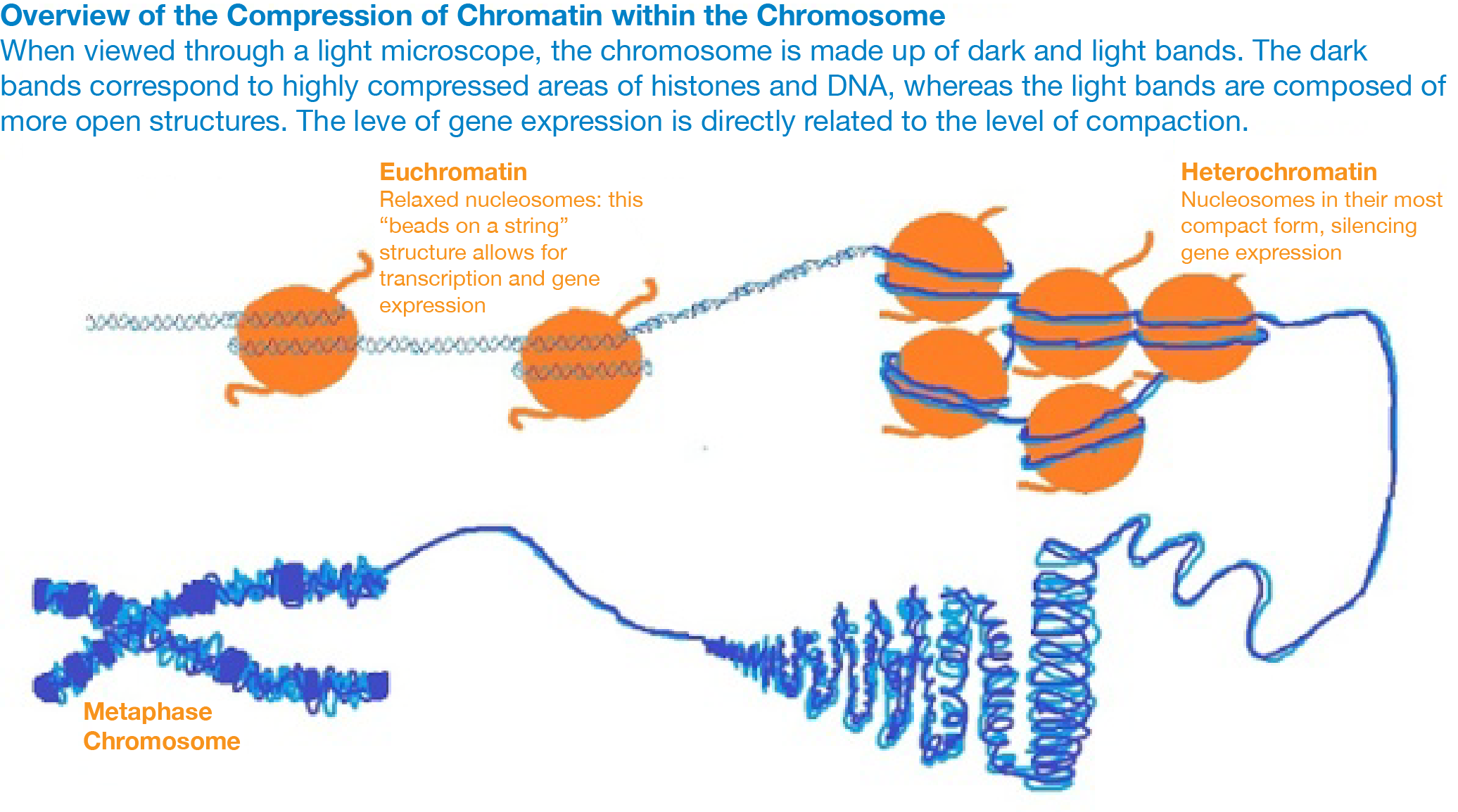 Fret Based Biosensor Figure 1-01.png