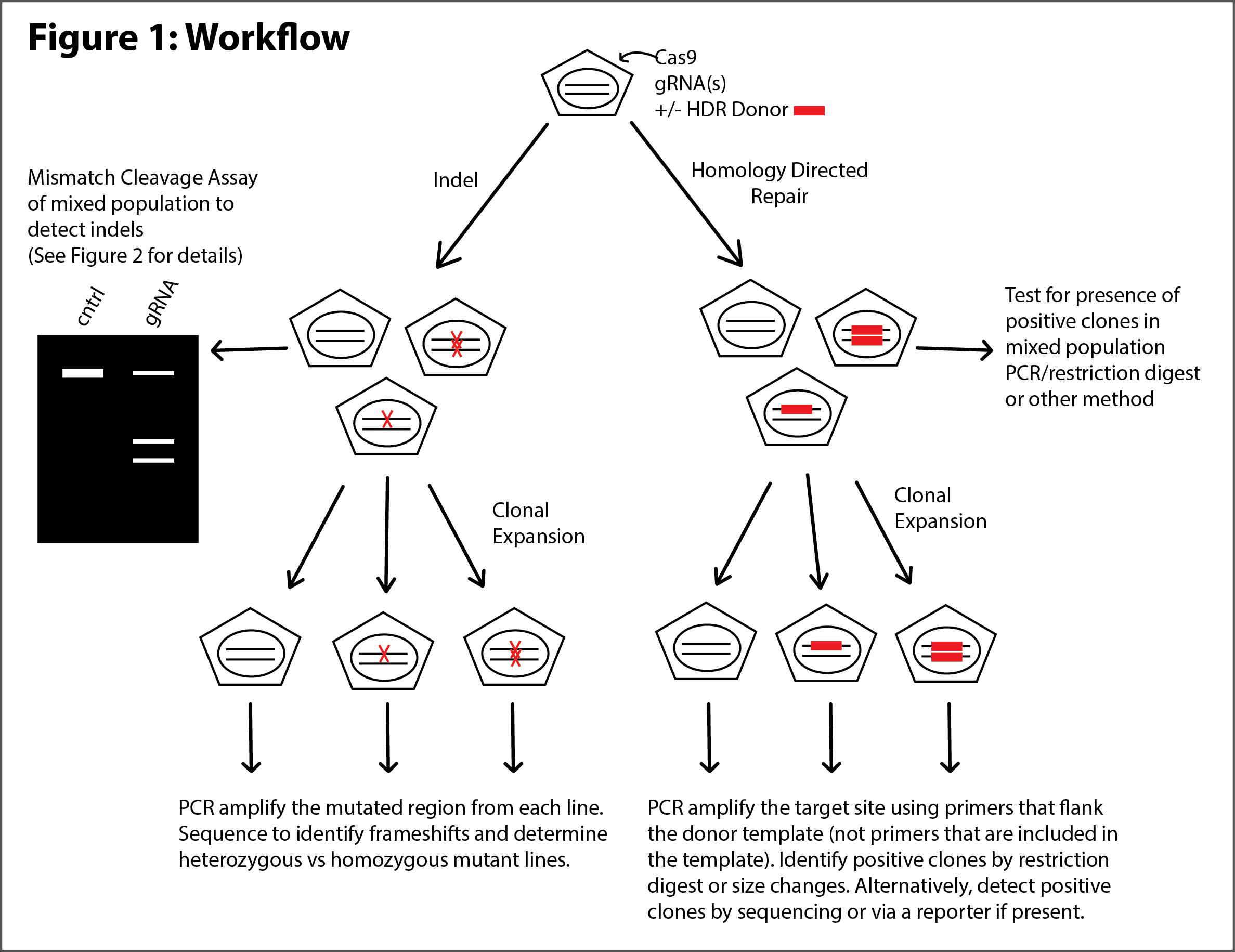 Genome_Edit_Validation_Workflow