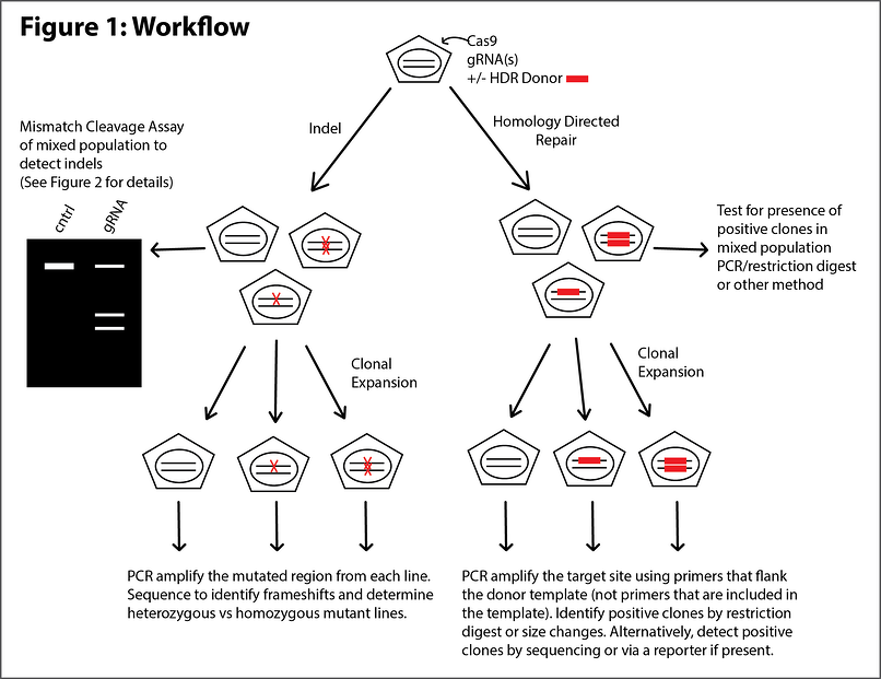 Genome_Edit_Validation_Workflow
