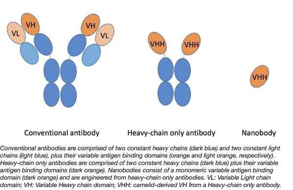 Nanobody schematic