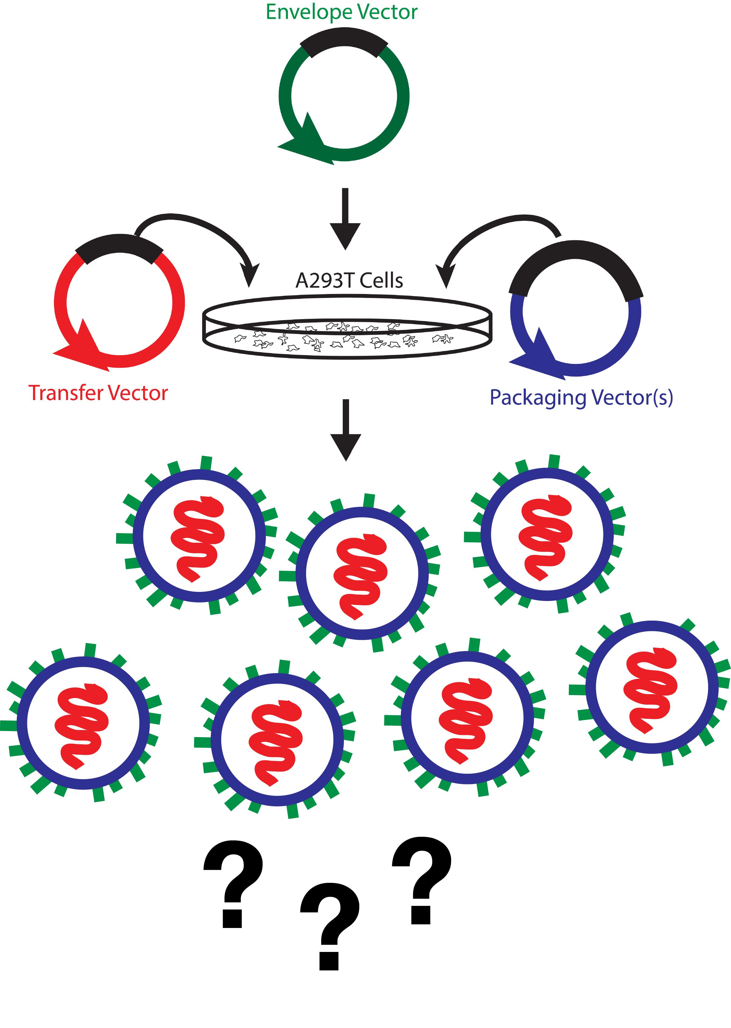Lentivirus Titering Diagram