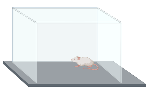 mouse-behavioral-test